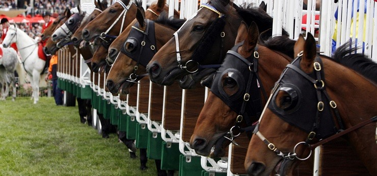 Sport betting horse racing odds bet on the come