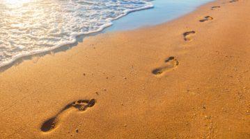 Pala-New-Jersey-footprint