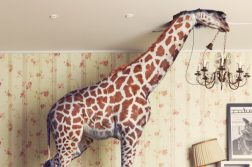 giraffe head in ceiling