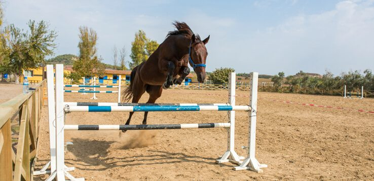horse jumping over bar