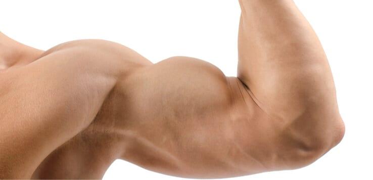 biceps muscle flex