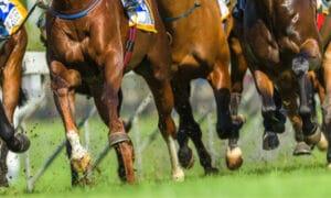 racehorse legs