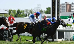 horse race preakness finish line
