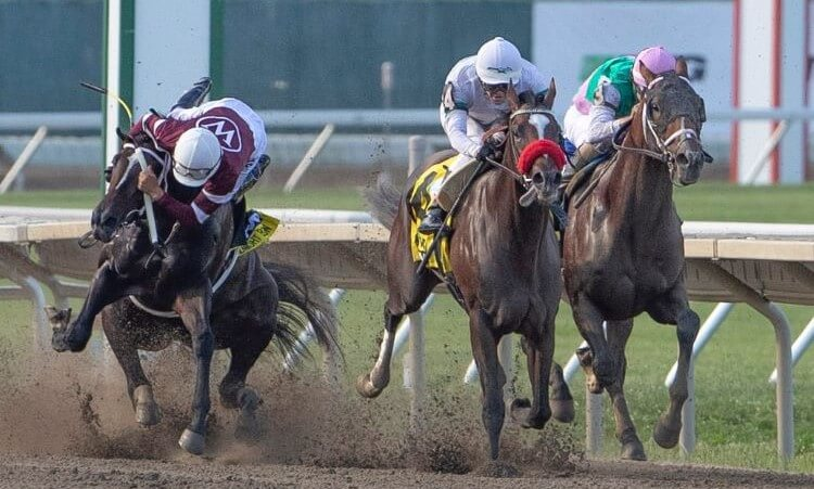 haskell stakes