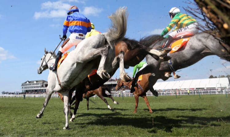steeplechase horses